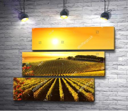 Виноградники Тосканы во время заката