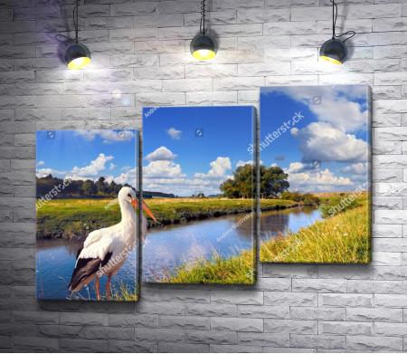 Белый журавль на берегу реки