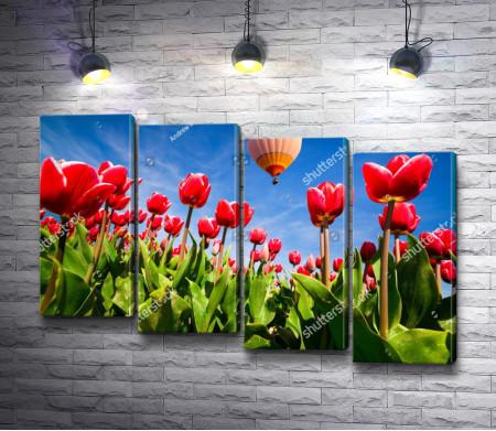 Воздушный шар над красными тюльпанами