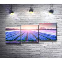 Восход солнца над тюльпанными полями Прованса