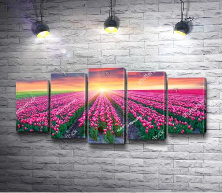Огненное небо на полем розовых тюльпанов