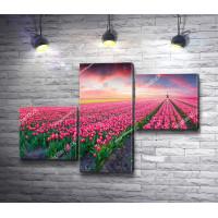 Розовый закат над полем тюльпанов