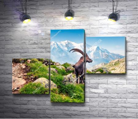 Горный козел в горах Монблан