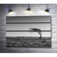 Одинокое дерево в пустыне, черно-белое фото