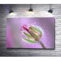 Необычный цветок с капельками росы