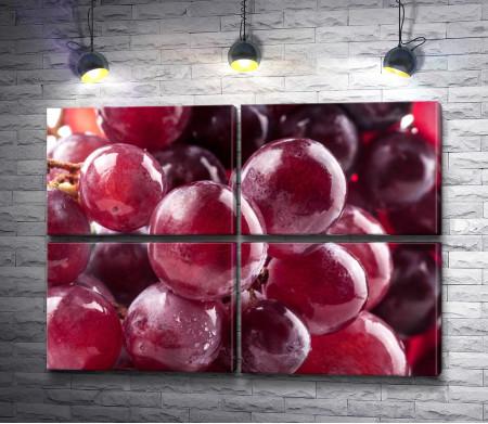 Виноградная гроздь, макросъемка