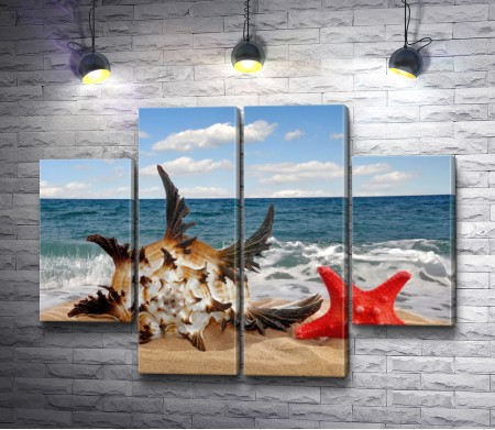 Ракушка и морская звезда на берегу моря