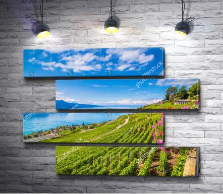 Зеленые виноградники на горном побережье