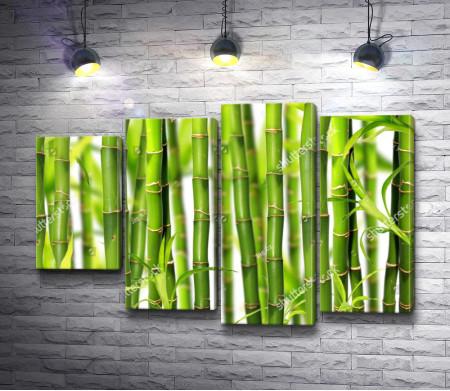 Бамбуковая роща, макросъемка