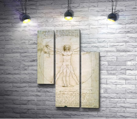 Да Винчи - Пропорции фигуры человека