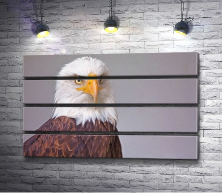 Хищная птица белоголовый орлан
