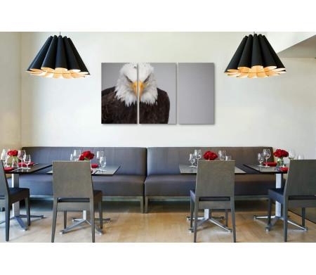 Гордый хищник - белоголовый орлан