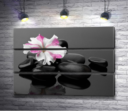 Нежный цветок на спа-камнях