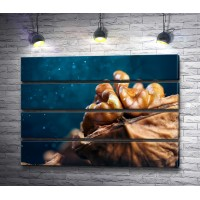 Грецкий орех, макросъемка