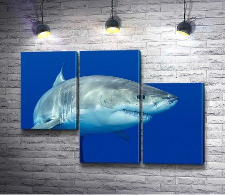 Белая акула в океане
