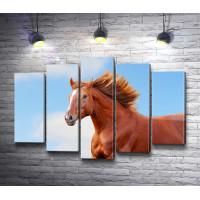 Лошадь с красивой гривой