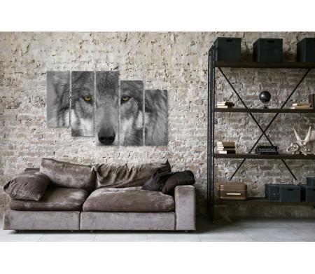 Волчий взгляд, черно-белое фото