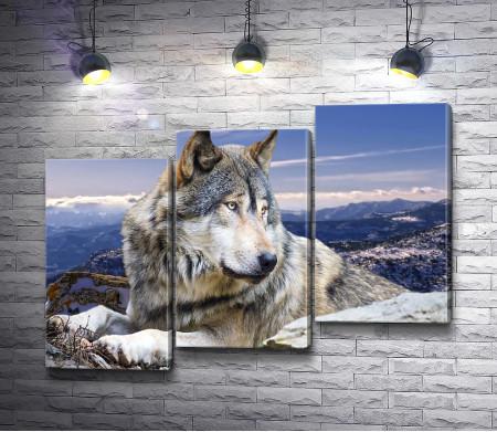 Волк на вершине горы