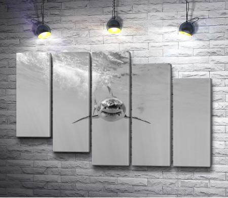 Акула, черно-белое фото