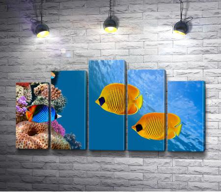 Желтые рыбы и кораллы
