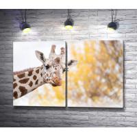 Морда жирафа, макросъемка