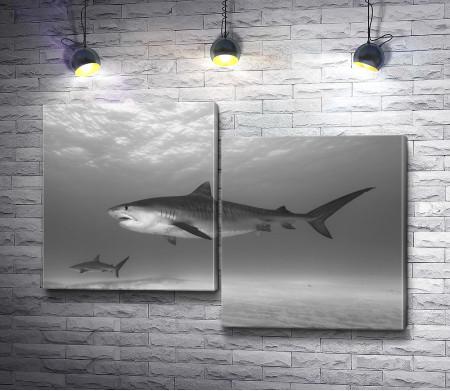 Акула на глубине, черно-белое фото