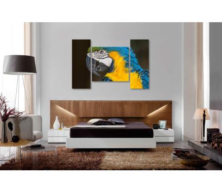 Сине-желтый попугай Ара