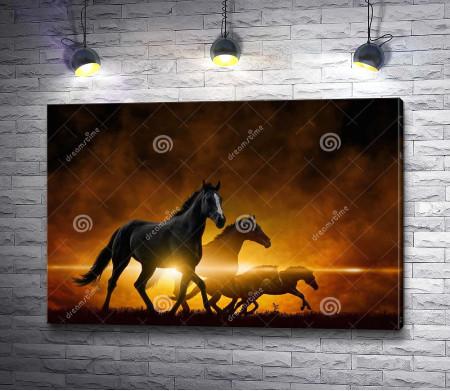 Лошади в лучах заката