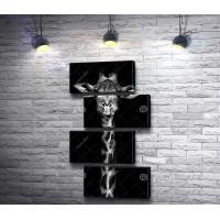 Жираф, черно-белое фото