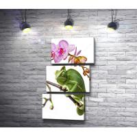 Хамелеон и розовая орхидея