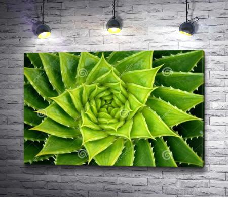 Зеленая спираль из листьев алоэ
