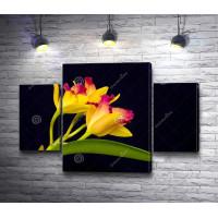 Желтая орхидея на черном фоне