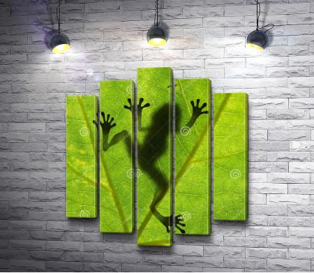 Тень лягушки на листе