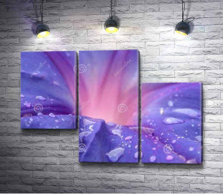 Пурпурный цветок, макросъемка