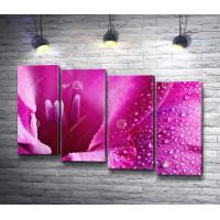 Розовый цветок в каплях росы, макросъемка