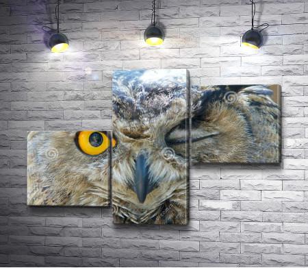 Подмигивающая сова