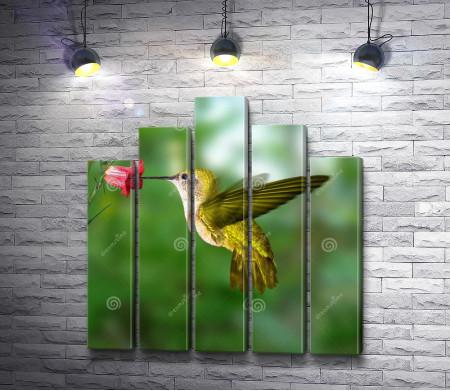Маленькая птичка Колибри