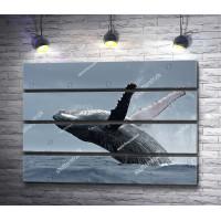 Прыжок кита в океане