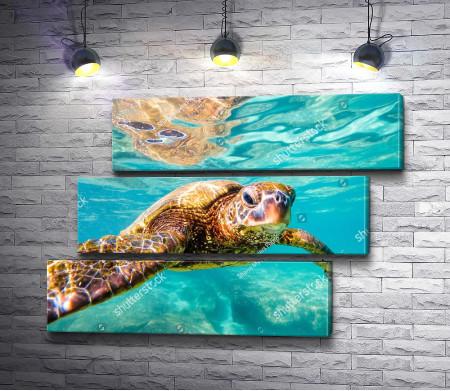Черепаха под морской гладью