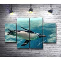 Пингвин под водой