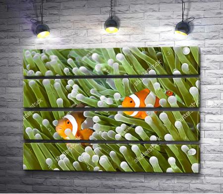 Рыбы прячутся в кораллах