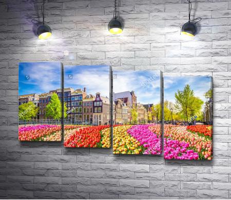 Дома и тюльпаны в Амстердаме