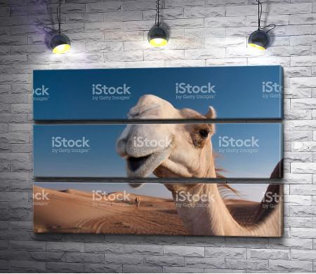 Улыбчивый верблюд