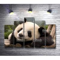 Панда на брусьях