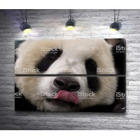 Панда с языком