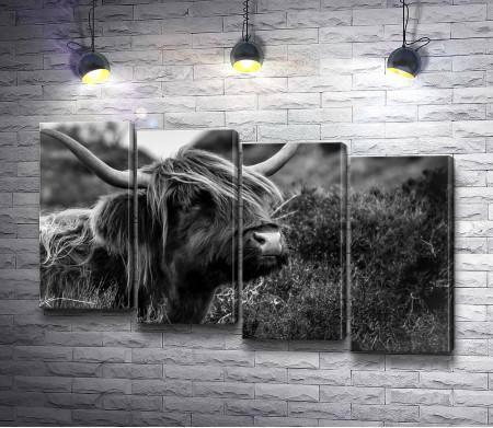 Бизон в черно-белой гамме