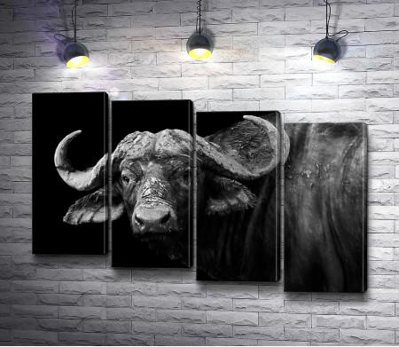 Свирепый взгляд буйвола, черно-белое фото