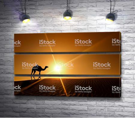 Верблюд на фоне заката