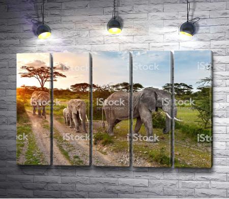 Семья слонов в саванне