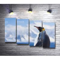 Одинокий пингвин